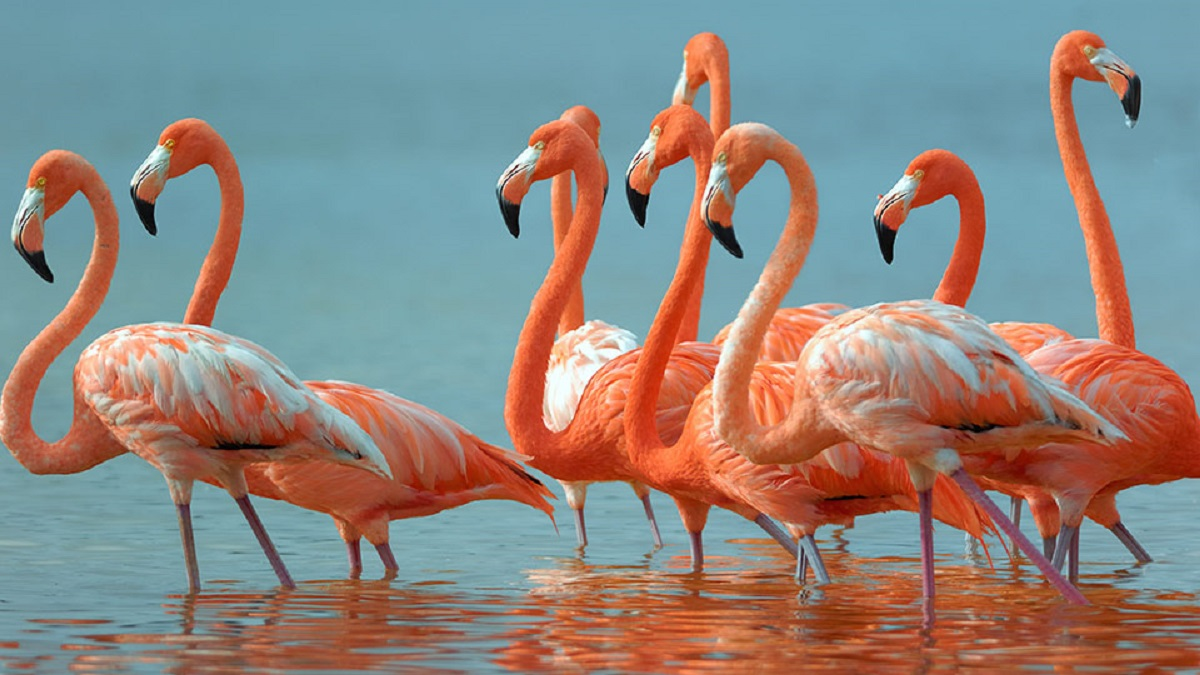 En yüksek sese sahip 10 hayvan