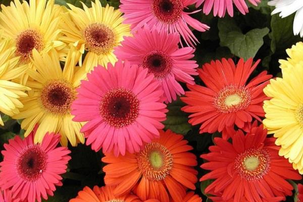 çiçeklerin anlamlarını dikkate almalıınız