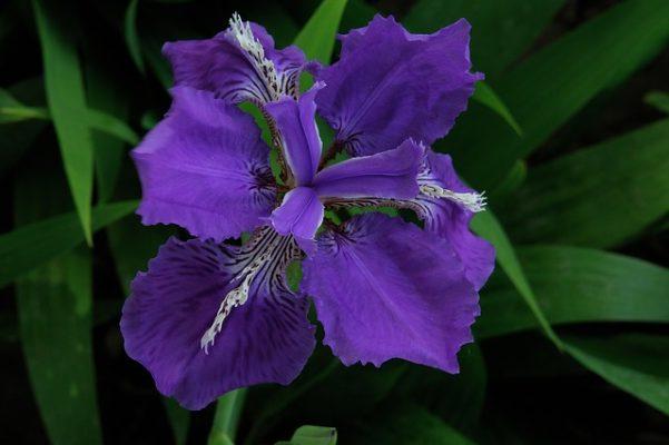 çiçeklerin anlamı zannettiğinizden daha derin