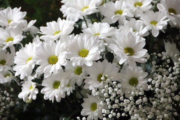 hareketli çiçekler ile ilgili görsel sonucu