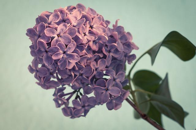 çiçek anlamları zannettiğinizden daha derin