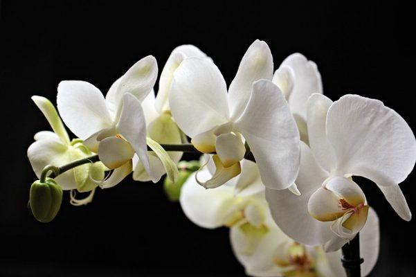 çiçek anlmaları zannettiğinizden daha derin