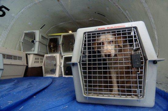 Dünyanın En Büyük Tavşanı, Sabıkalı United Airlines Uçağında Öldü