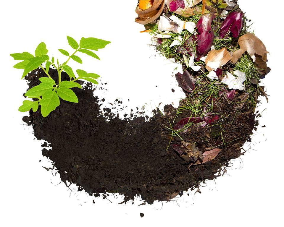 neden Solucan gübresi kompost kullanmalıyız