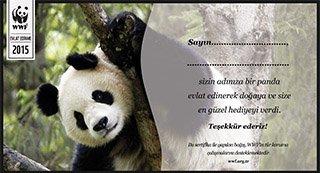 dünyanın en sevimli,en şapşik canlısı pandalar hakkında bilgi