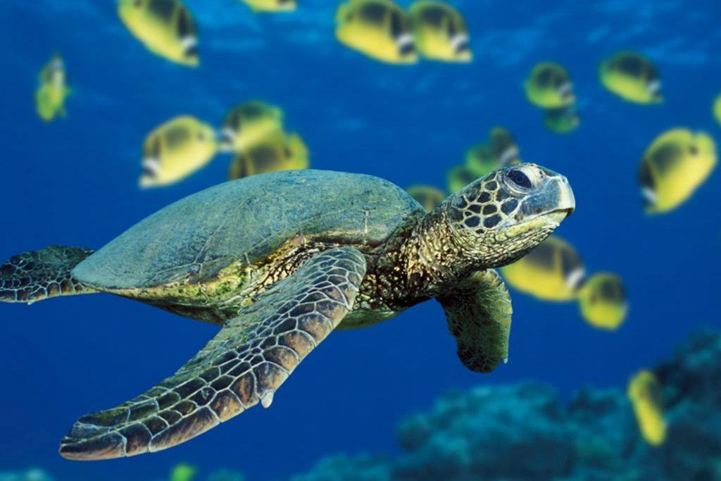 Bir ev seçmek için ne tür bir kaplumbağa