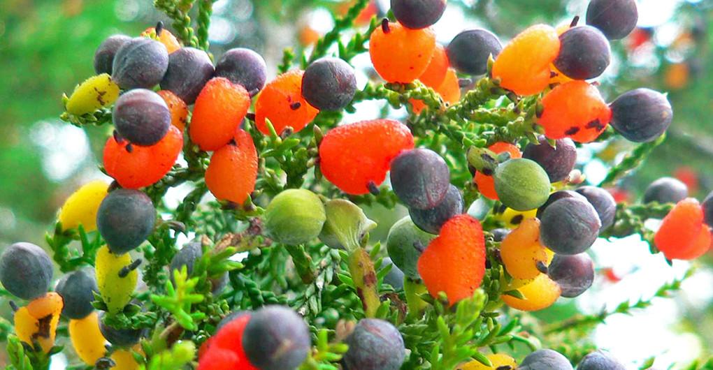 ağaçta meyve ile ilgili görsel sonucu